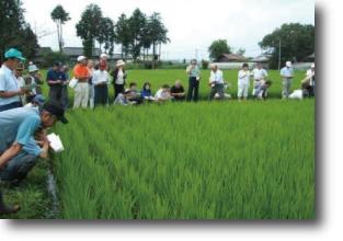 栽培技術の現地勉強会
